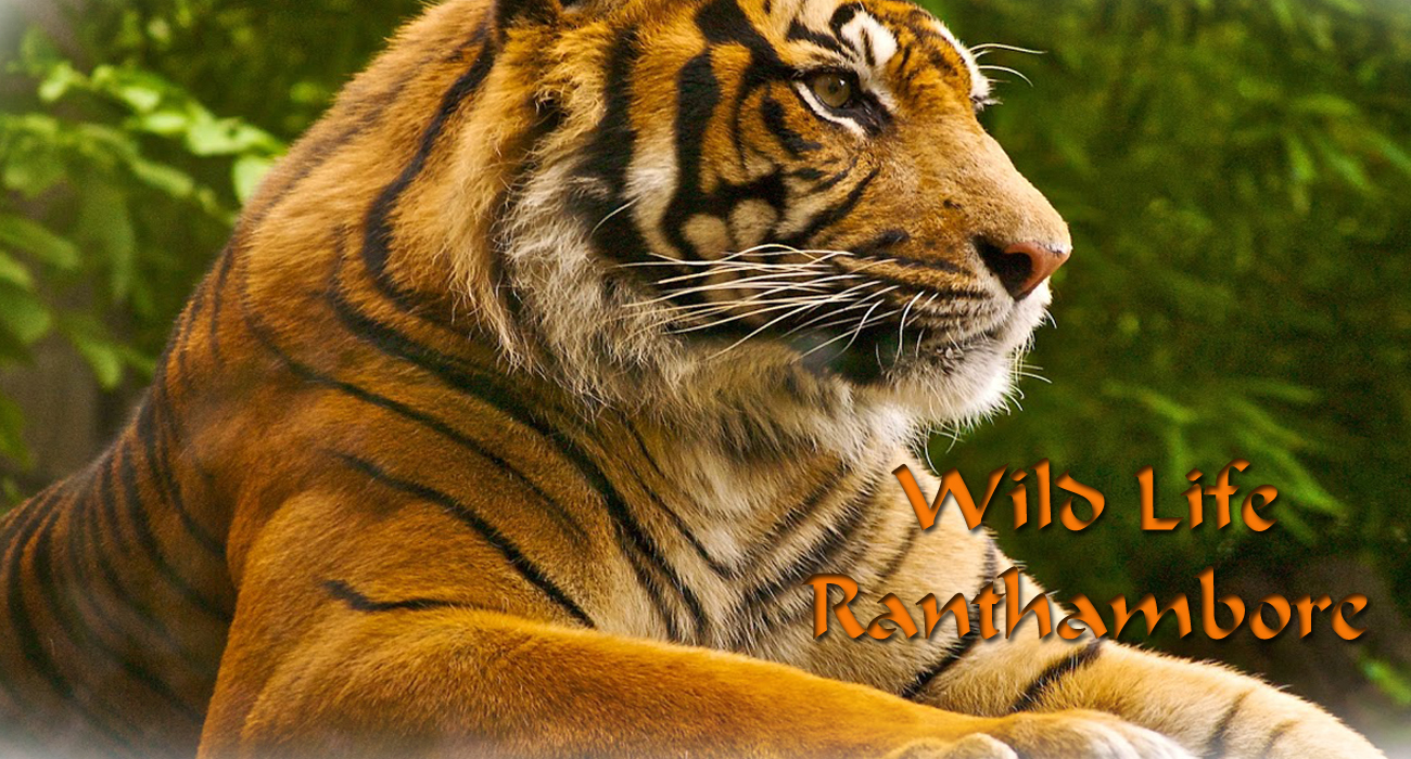 ranthambore tour-weekends