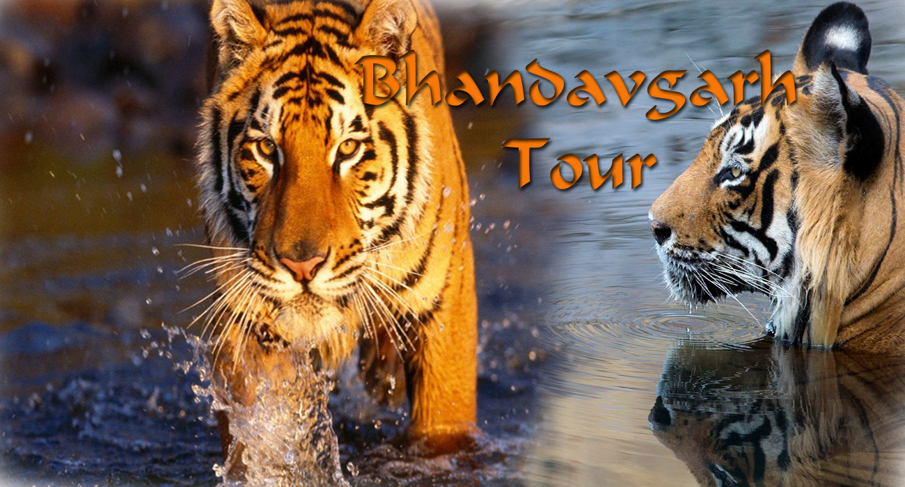 Bhandvgarh tour wildlife tours