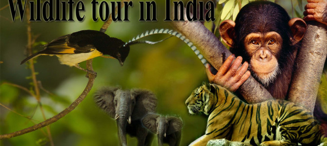 Wildlife tours India is an adventure